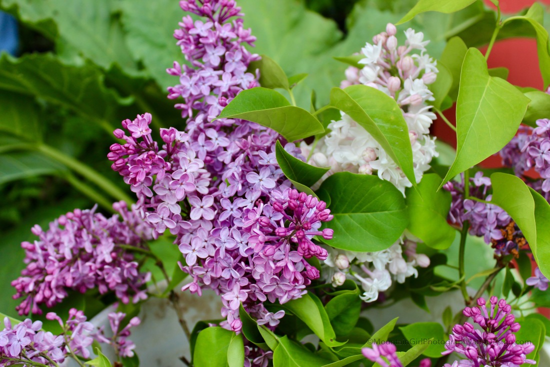 'She Knows There Will Be Lilacs'
