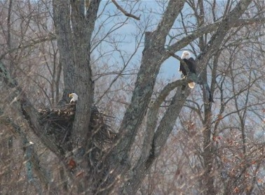 A pair of Catskills eagles